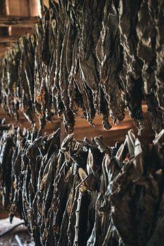 Tabaksbladeren van Ruben Schouw