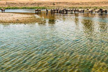 Konik paarden in het water. van