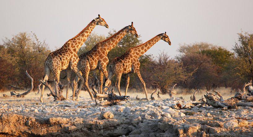 Giraffen bij waterput in Afrika van Jeffrey Groeneweg