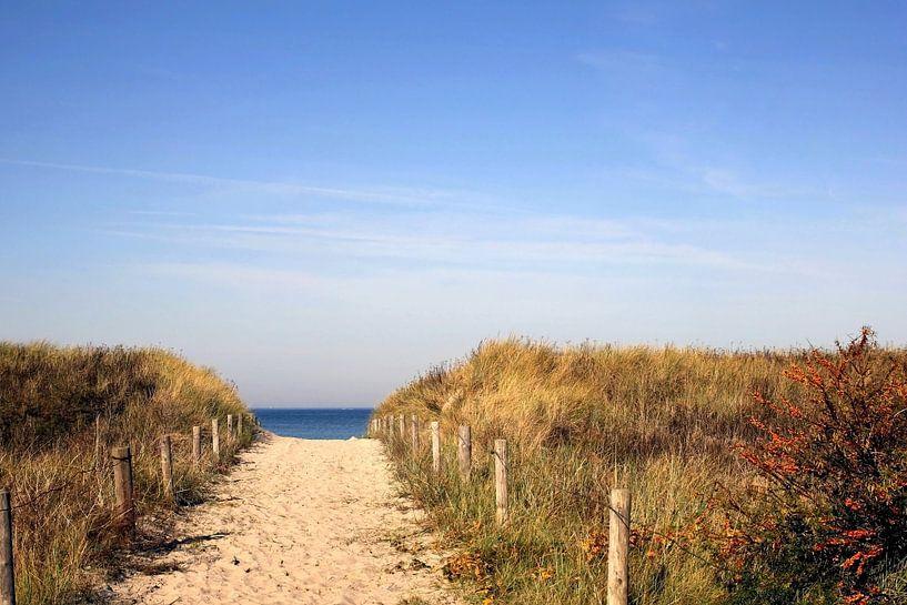 Herbstdünen van Ostsee Bilder