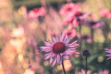 Blumen Teil 175