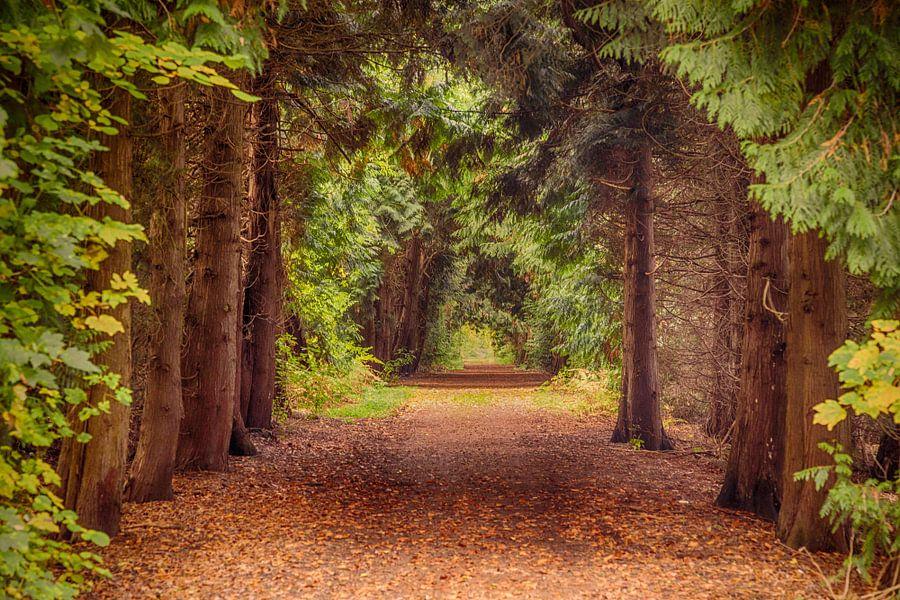 Een weg door het bos bij Slot Moyland