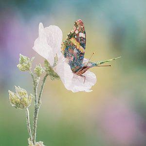 boho vlinder van Babette van den Berg