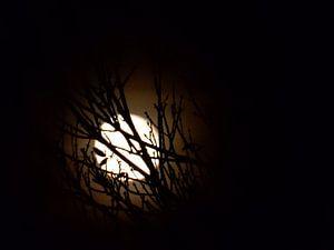 The moon van
