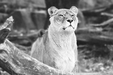 Zoo Antwerpen 4 von Cynthia Jansen