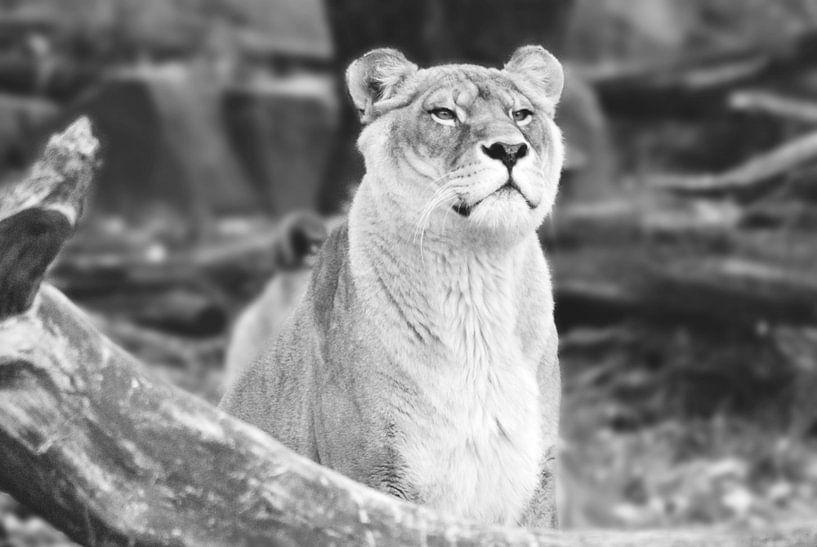 Zoo Antwerpen 4 van Cynthia Jansen