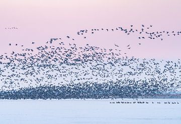 Opvliegende vogels Sneekermeer bij zonsopkomst van Margreet Riedstra