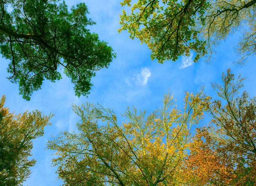 Boomtoppen in herfstkleuren met blauwe lucht van Peter Bolman