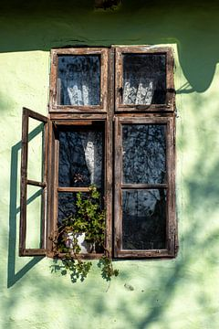 Grünes Guckloch von Amber de Jongh
