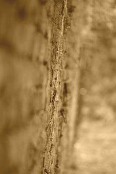 The wall van Frank Ubachs fotografie