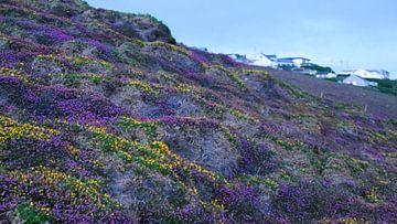 Une mer colorée de fleurs sur la côte anglaise sur Saskia Pasman