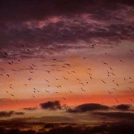 Vogels bij zonsopkomst van Frans Vanderkuil