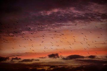 Vögel bei Sonnenaufgang