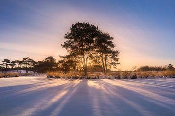 Sonnenstrahlen von Jeroen Lagerwerf