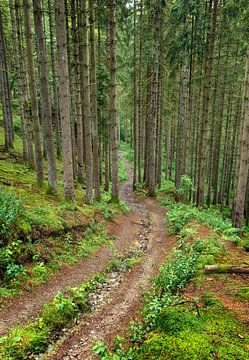 Regenachtig bos, Achouffe, Belgische Ardennen van Sebastian Rollé - travel, nature & landscape photography