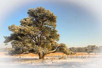 Eenzame boom van Cees van Miert