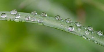 Water drops sur Lorena Cirstea