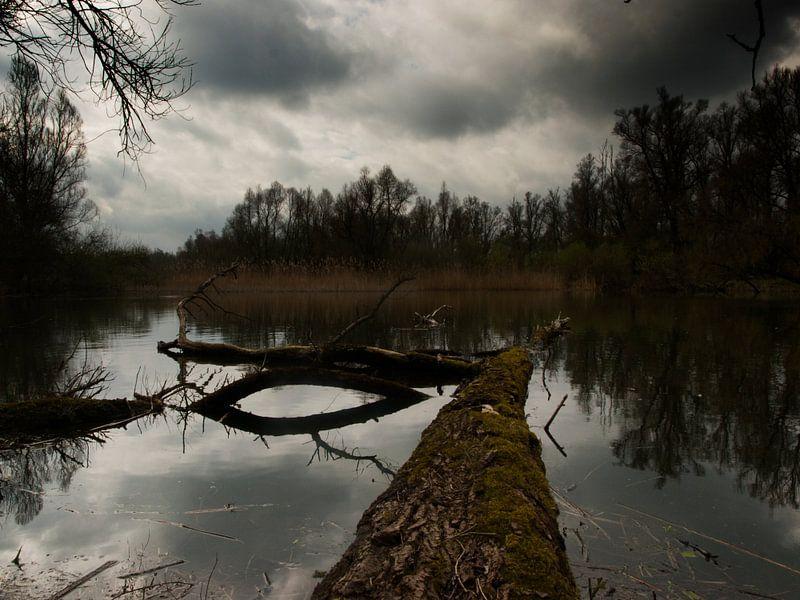 Moeras swamp van jos van zijl op canvas behang en meer