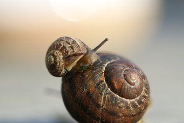 Slak en mini-slak van Bärbel Severens