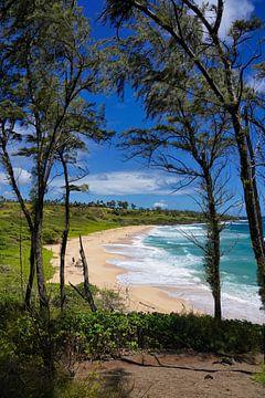 Donkey Beach - Hawaii van