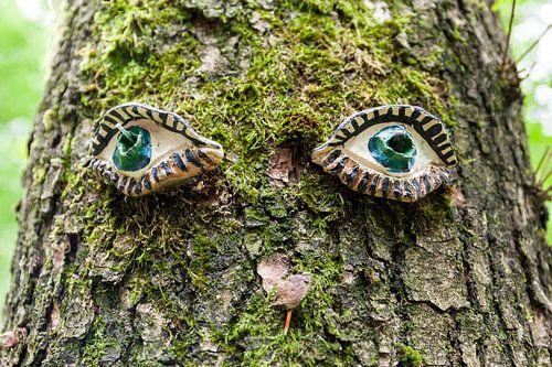 Een Eikenboom met een eigen gezicht