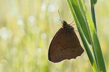 Vlinder van Astrid Brouwers