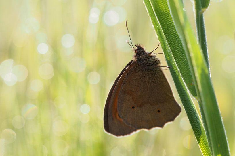 Vlinder von Astrid Brouwers
