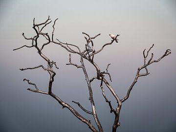 De boom van de vrede in Jaipur India van Rik Pijnenburg