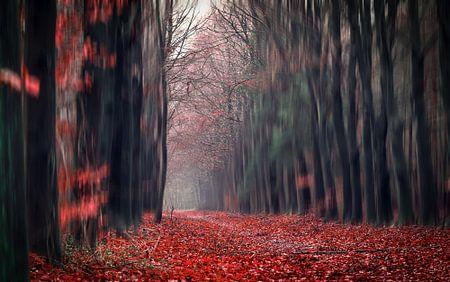 Red forest walk through