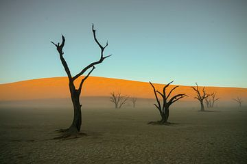 Dode bomen in Deadvlei Namibië van Adri Klaassen