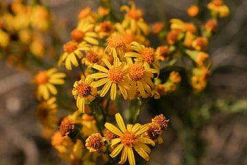 Gele bloemen. van Jeroen Beemsterboer