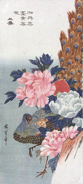 Pauw en pioenrozen, Hiroshige van 1000 Schilderijen