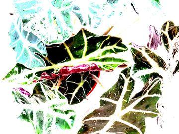 Kamerplant: Alocasia Zebrina | Olifantsoor 1-C von MoArt (Maurice Heuts)