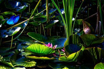 Schmetterlingsgarten von ellenilli .