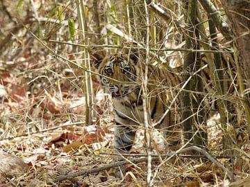Nieuwsgierige tijger van Thea Kleinrouweler