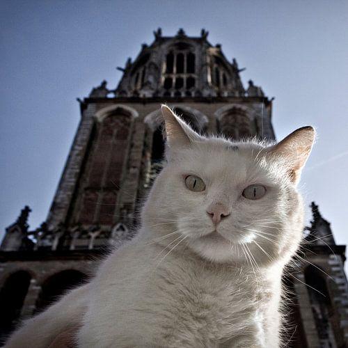 Pubcat at Dom tower, Utrecht von Robert van Willigenburg