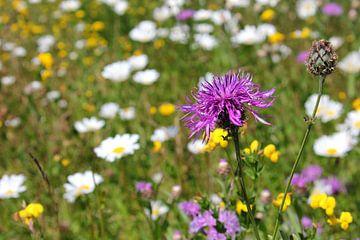 Wilde bloemen van Ostsee Bilder