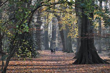 Oud bos met grote beuken in de herfst van Susan Dekker