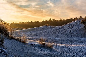Sonnenaufgang in den Noordhollandse Dünen von Dokra Fotografie