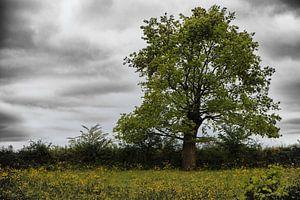 Eenzame boom ll