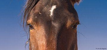 Wild Horses Namib desert, Paarden, Ogen von Ton van den Boogaard