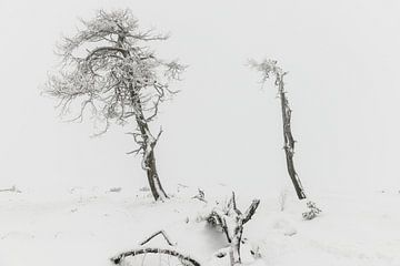 L'hiver dans les Hautes Fagnes sur Jim De Sitter
