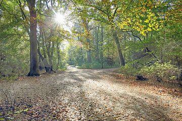 Wandelen in de Hout in de herfstzon van Ronald Smits