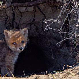 Jong vossenwelpje van Natascha Worseling
