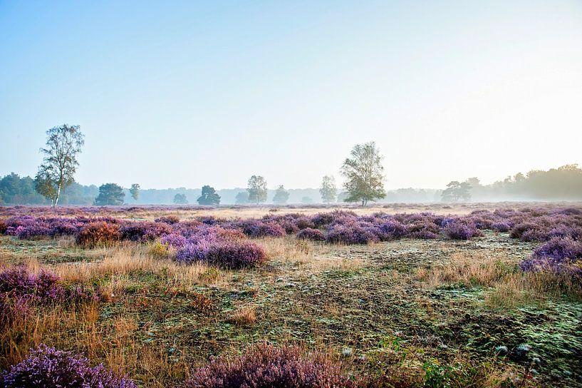 Purple morning van Anouschka Hendriks