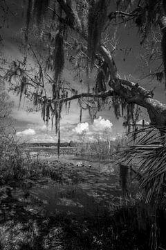 Leesburg in zwart wit van Martin van der Sanden