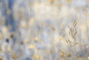 Dreamland - Gold