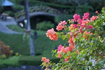 Bloemen in de zon van Norbert Erinkveld