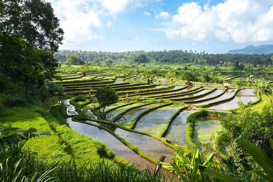 Prachtige rijstterrassen in Bali van Joris Pannemans - Loris Photography