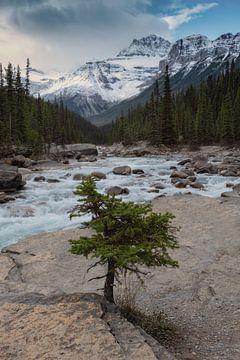 Yoho-Nationalpark, Kanada von Colin Bax